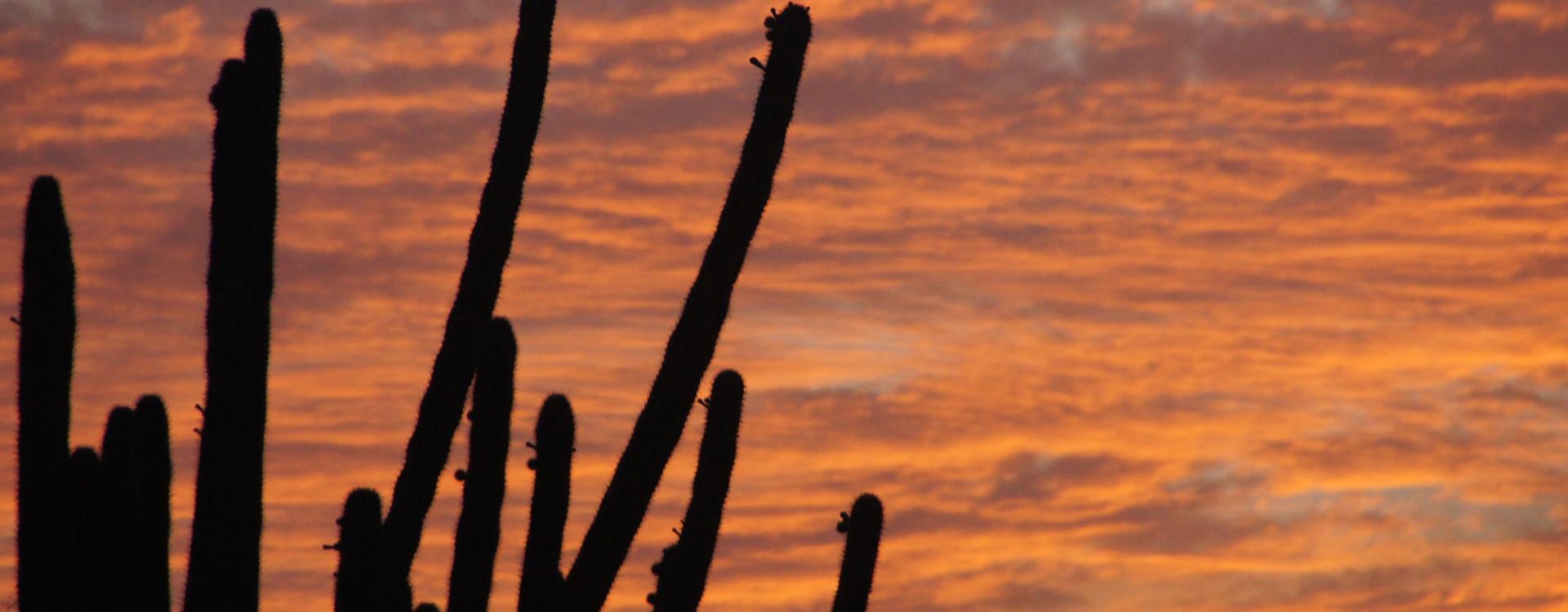 Aruba Sunset – Cactus Silhouette