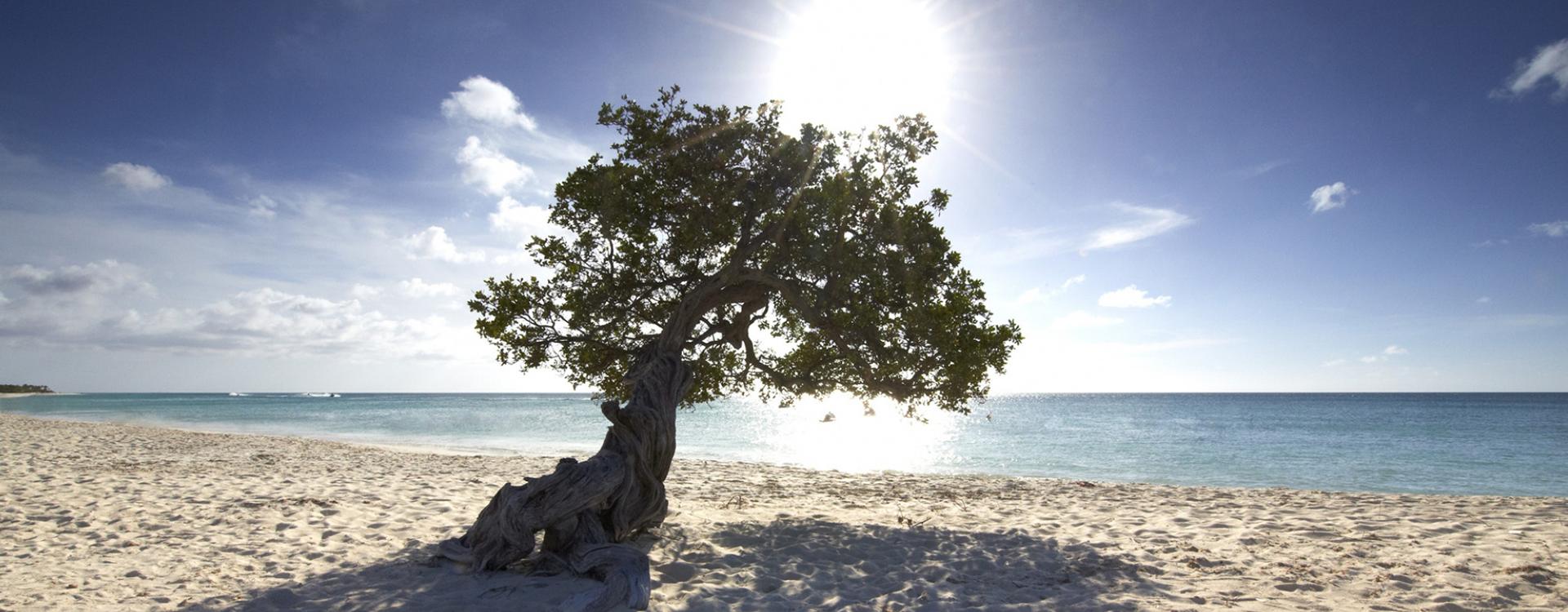 Aruba Sunny Day